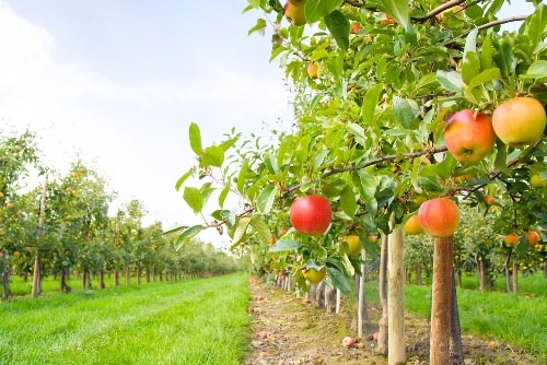 Top 6 Farms To Pick Fall Fruits